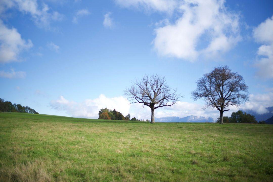 Mes arbres préférés à Leschaux