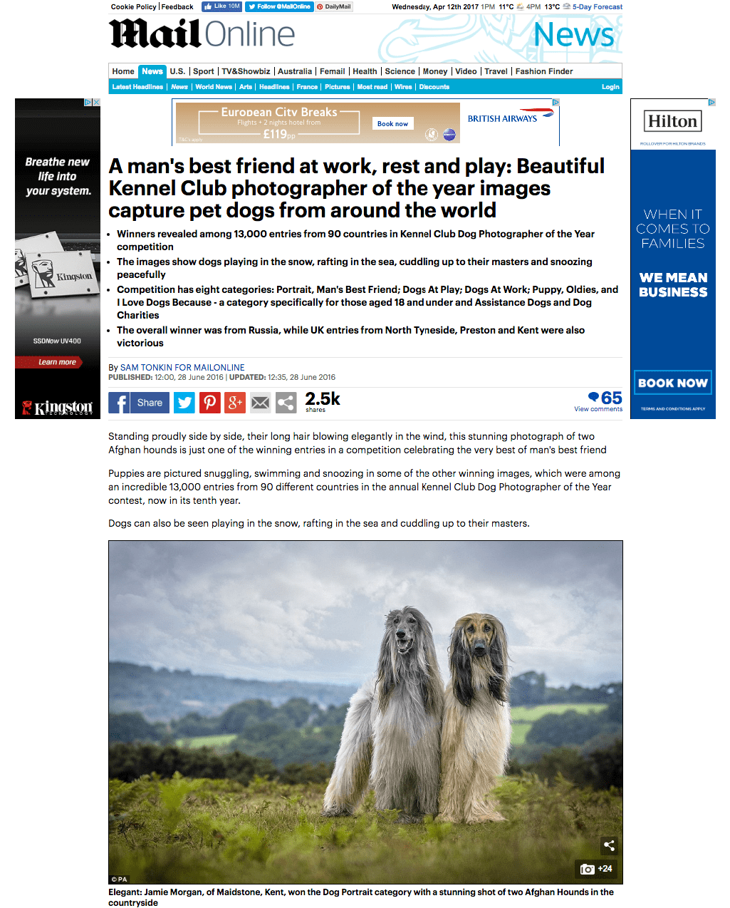 daily mail dog photographer of the year