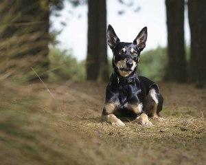 surrey dog photographer
