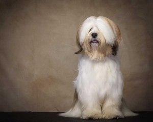 work with Dog photographer UK038