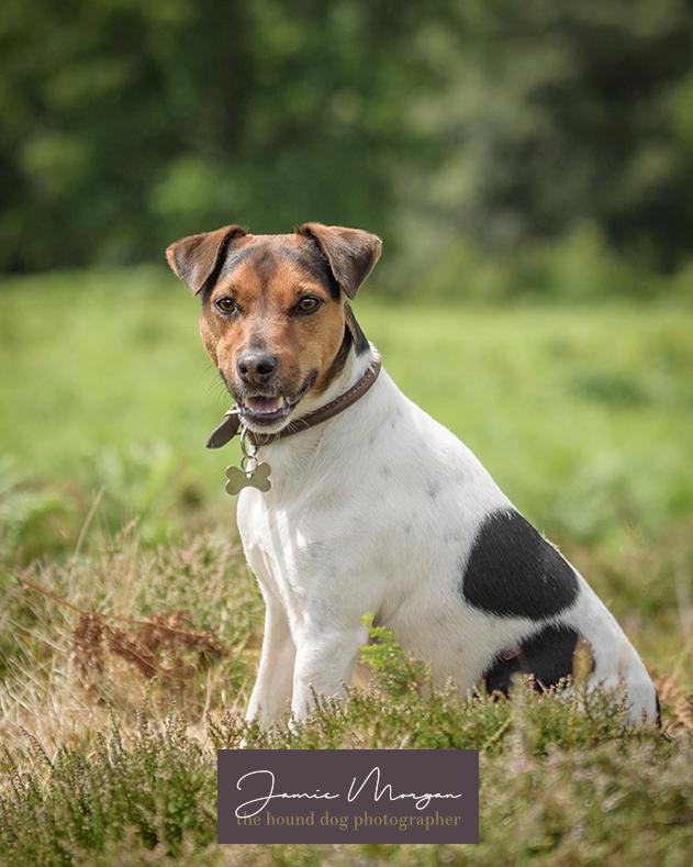 Dog Photographer Jamie Morgan providing Kent Dog Photoshoots
