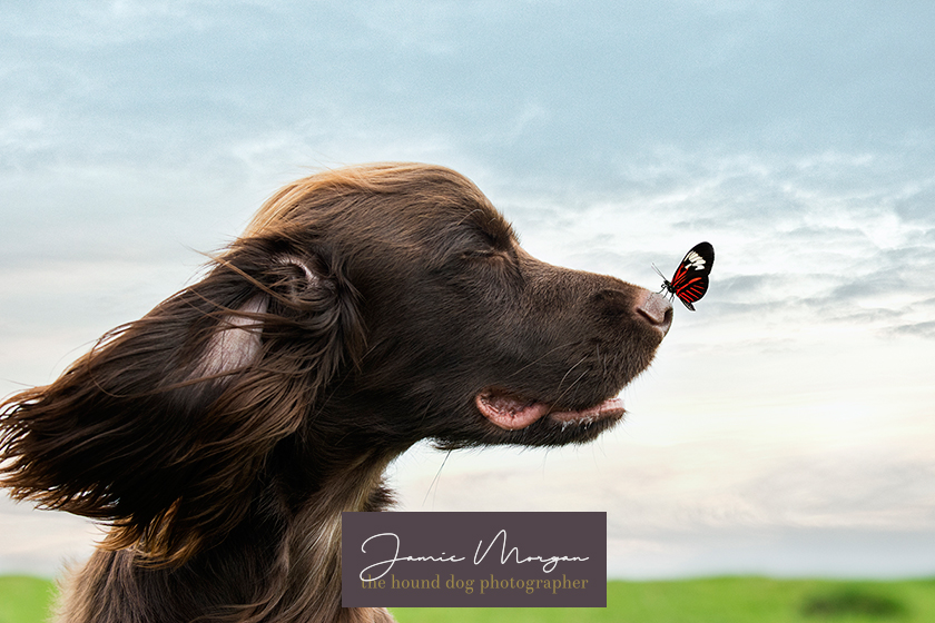 Wye Crown Ashford Kent Dog Photographer Jamie Morgan