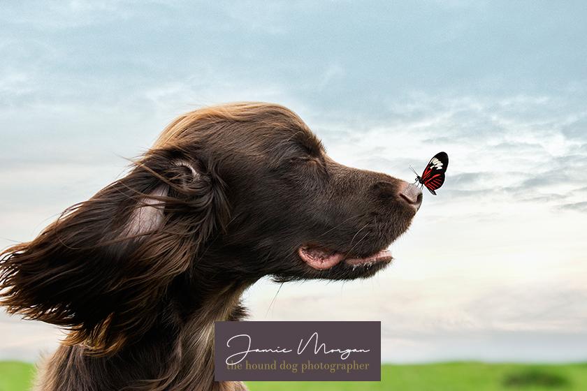 Wye Crown Ashford Kent Dog Photographer Jamie Morgan