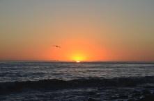 sunset_bird