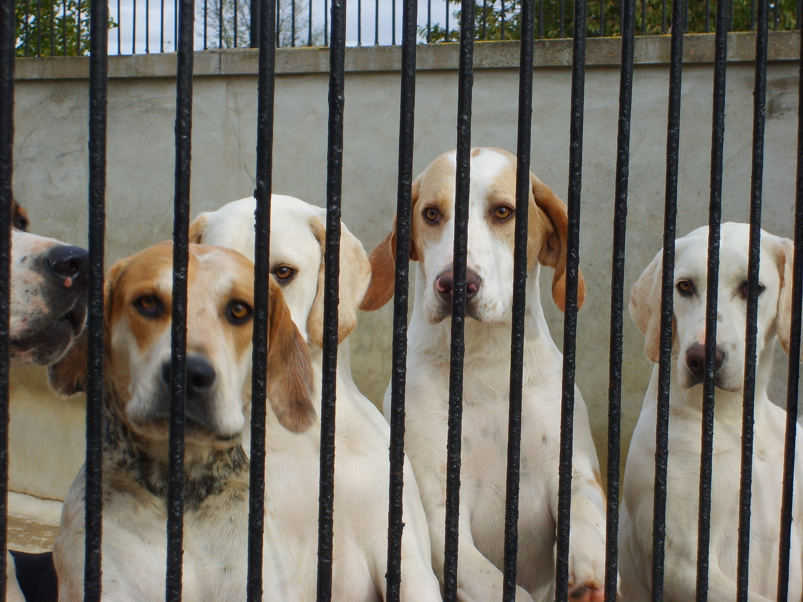 The Thurlow hounds
