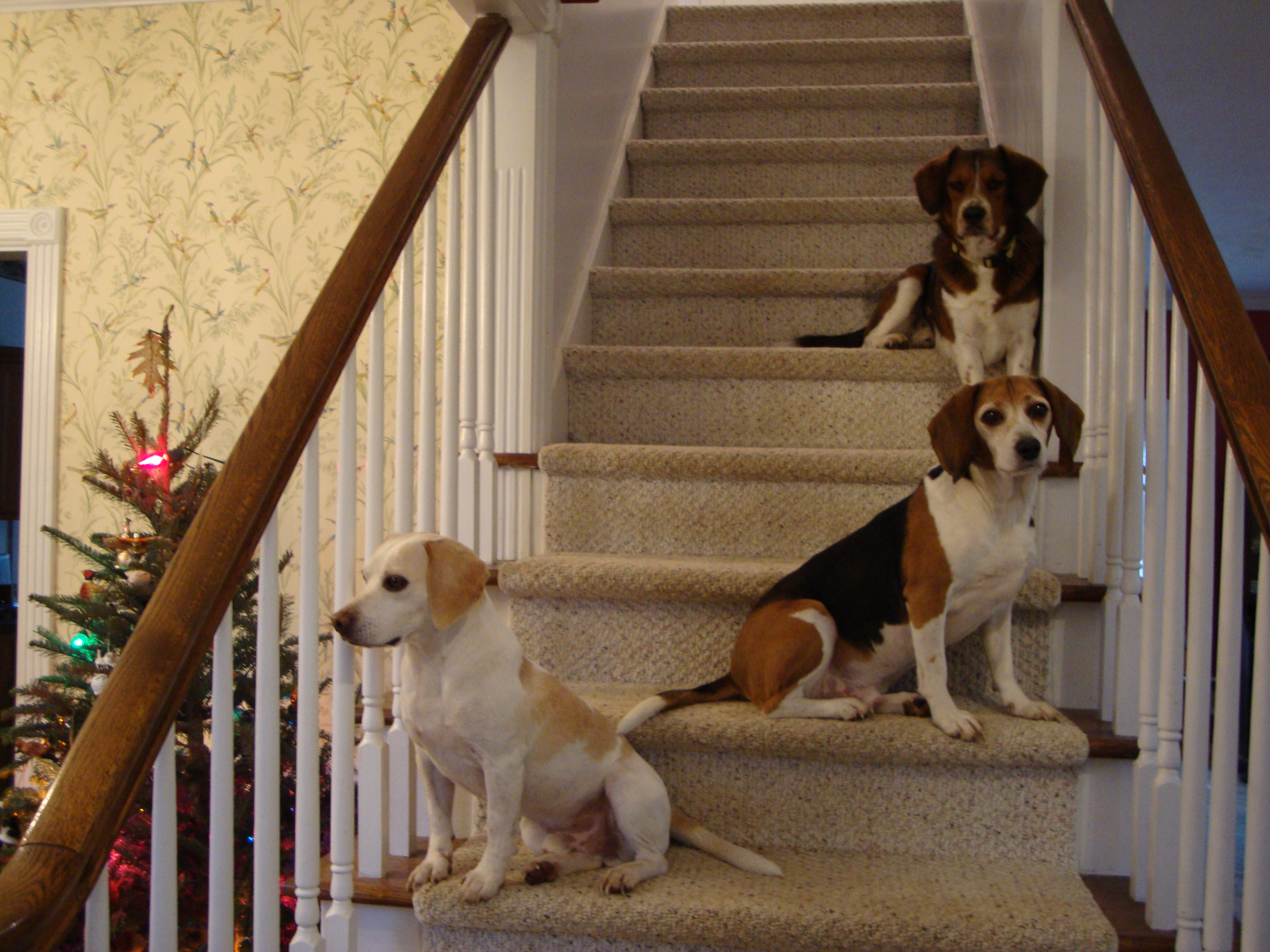 House hounds on the stairs