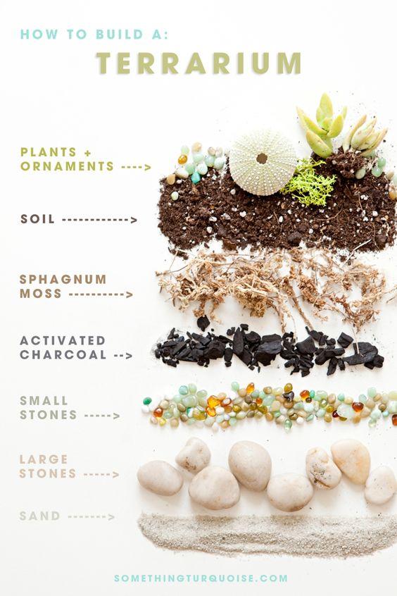 Definición de terrario