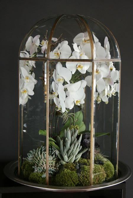 Terrarium Orchid