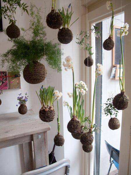 kokedama plants