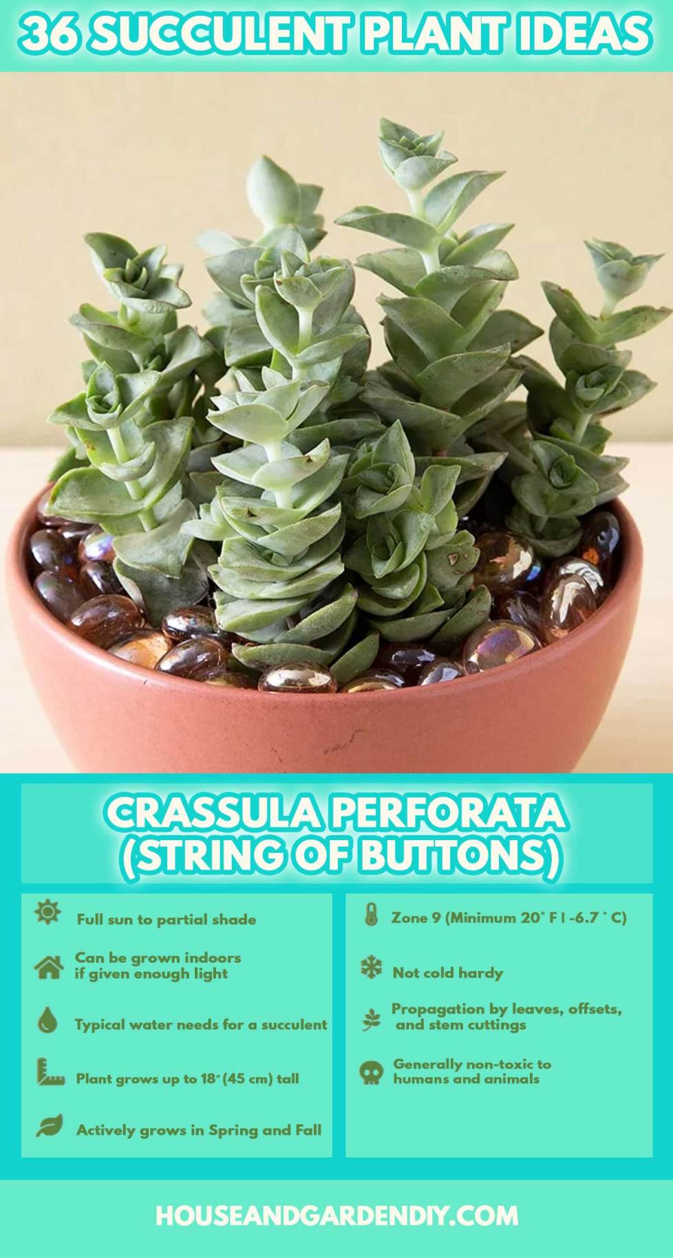 pictures of cactus house plants