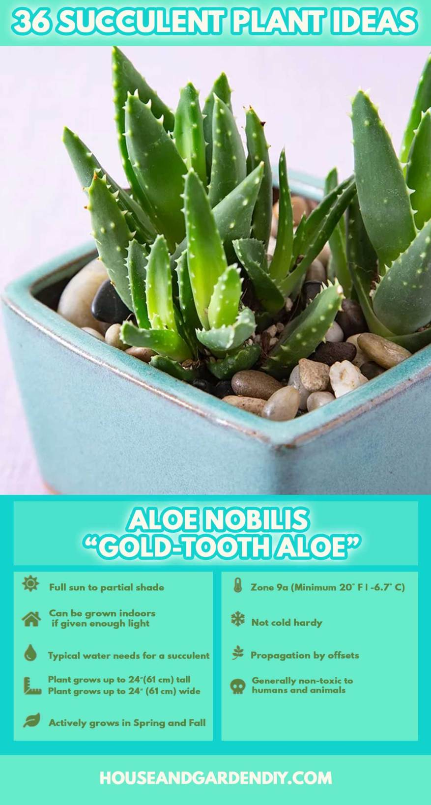 growing succulent plants outdoors
