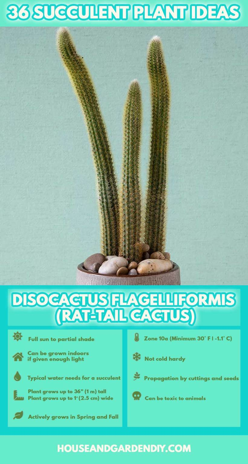 succulent names and pictures