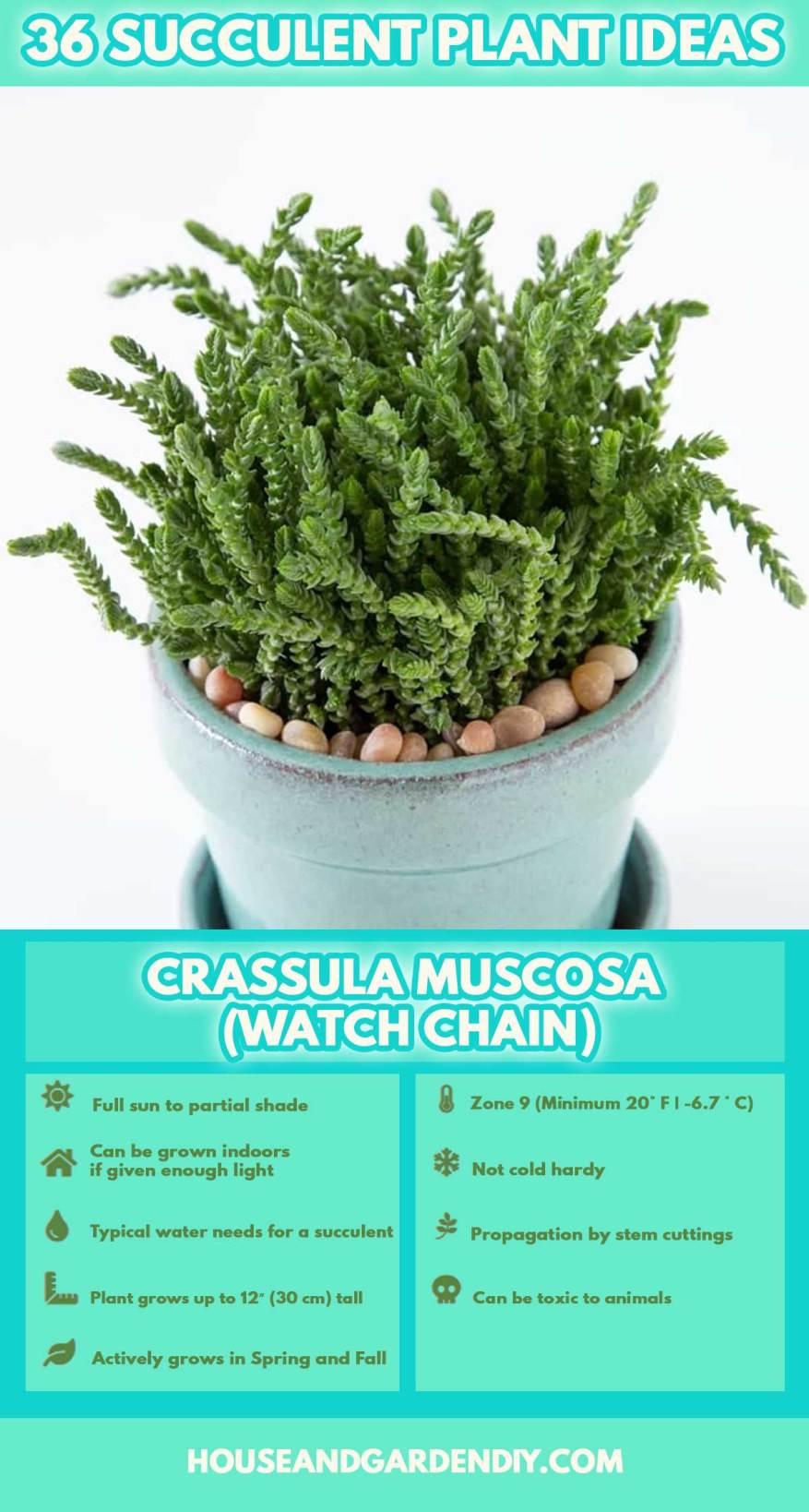 50 Beautiful Succulent Garden Ideas Succulent Varieties How To