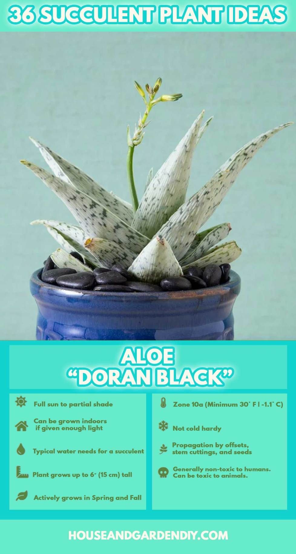 ideas for succulent containers