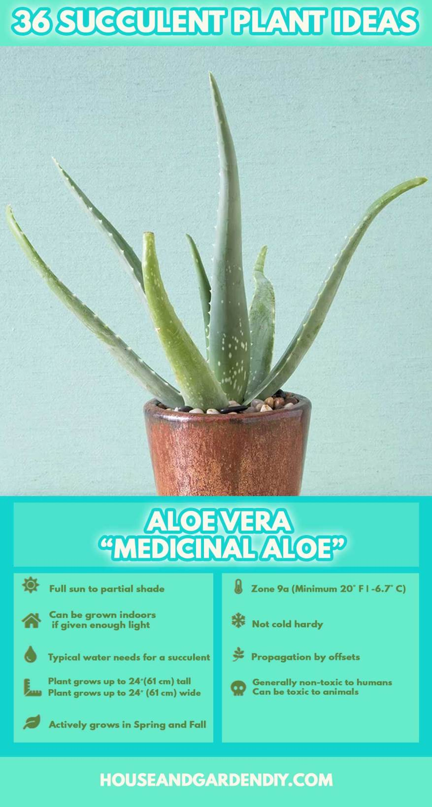 names of succulent plants