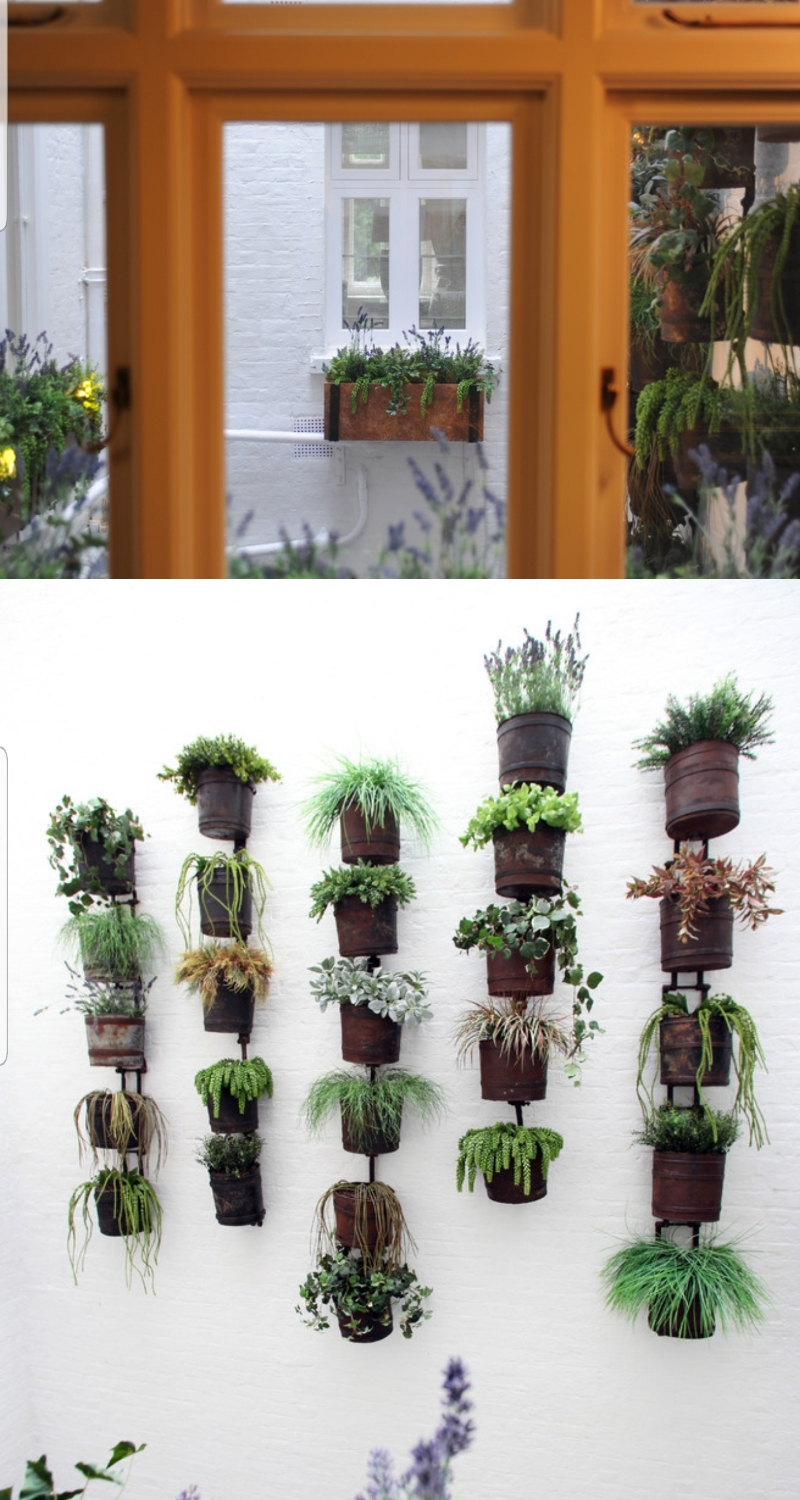 creative ideas with succulents plants