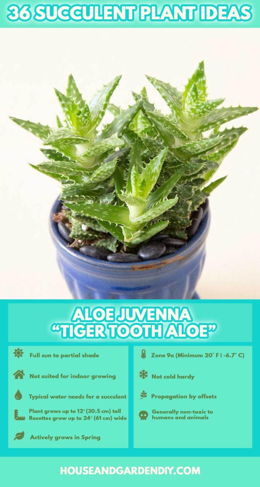 types of succulent plants