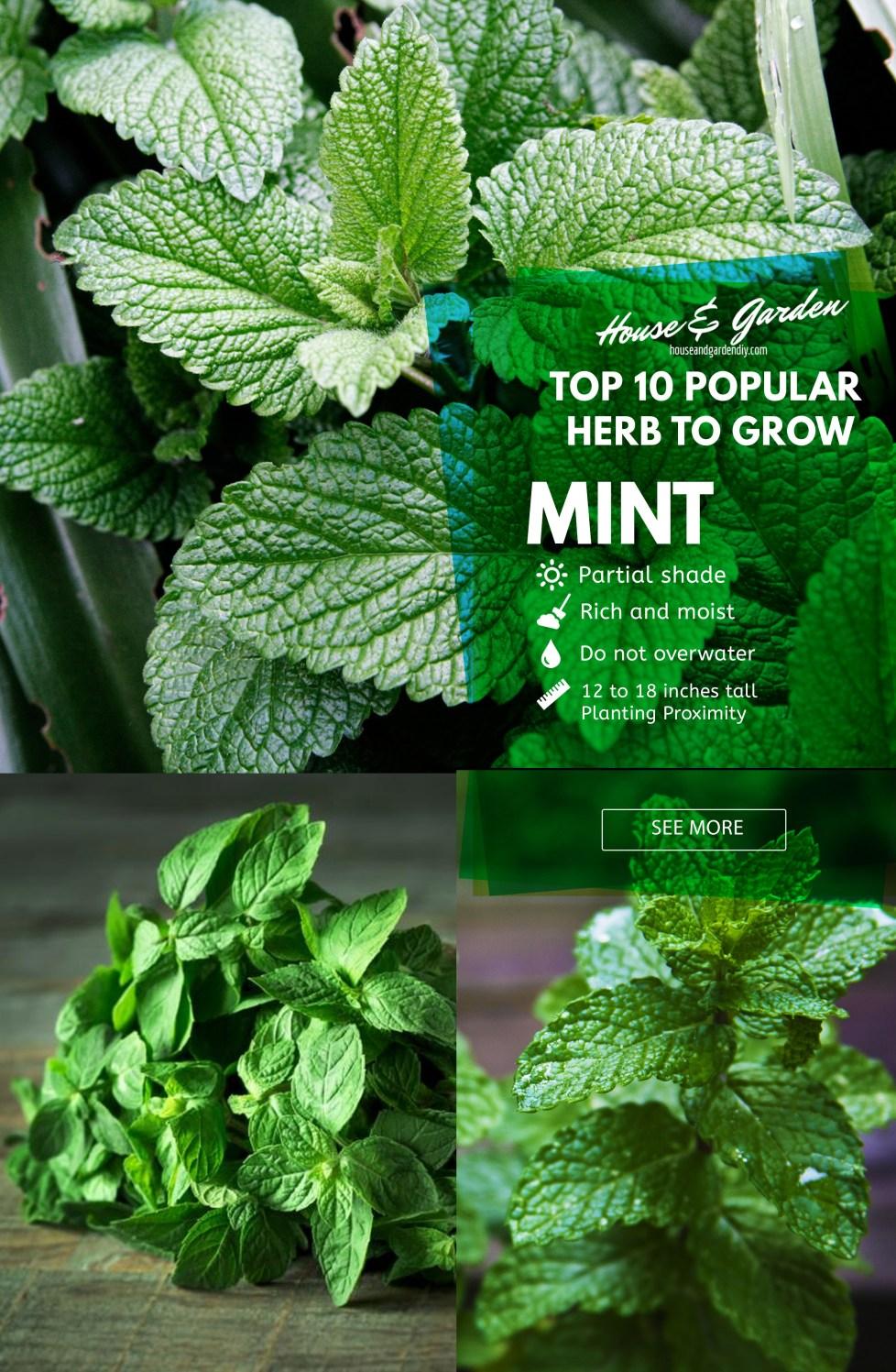 diy herb garden ideas