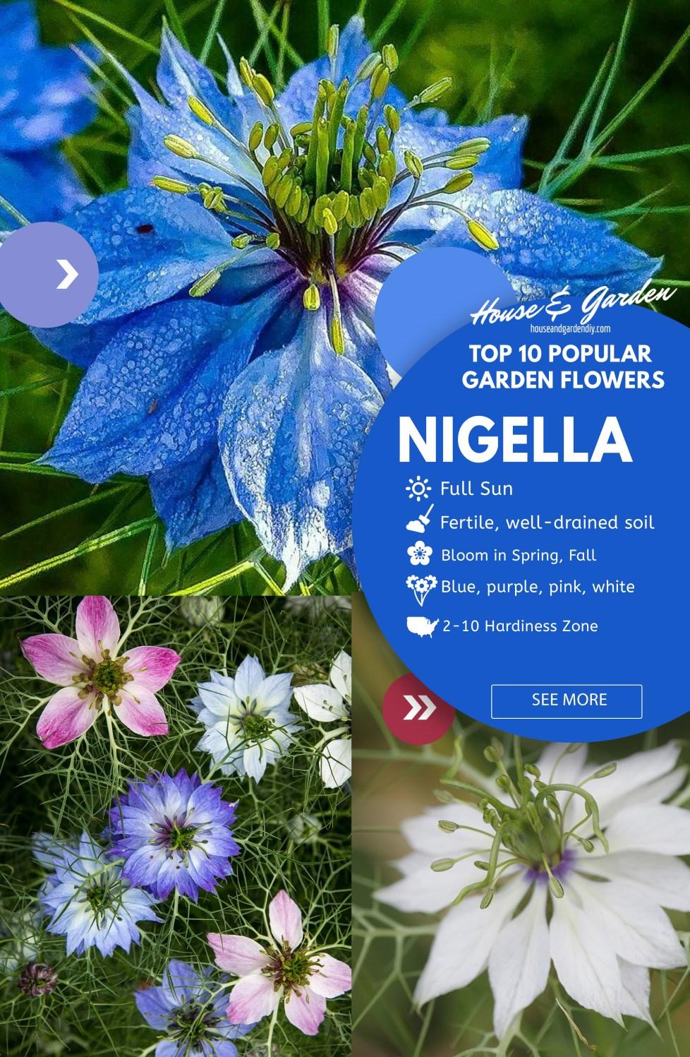 flower garden ideas on pinterest