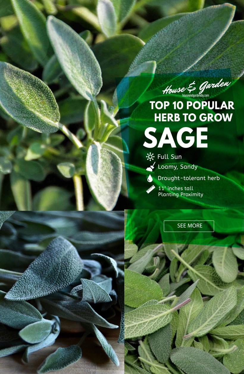 herb garden layout