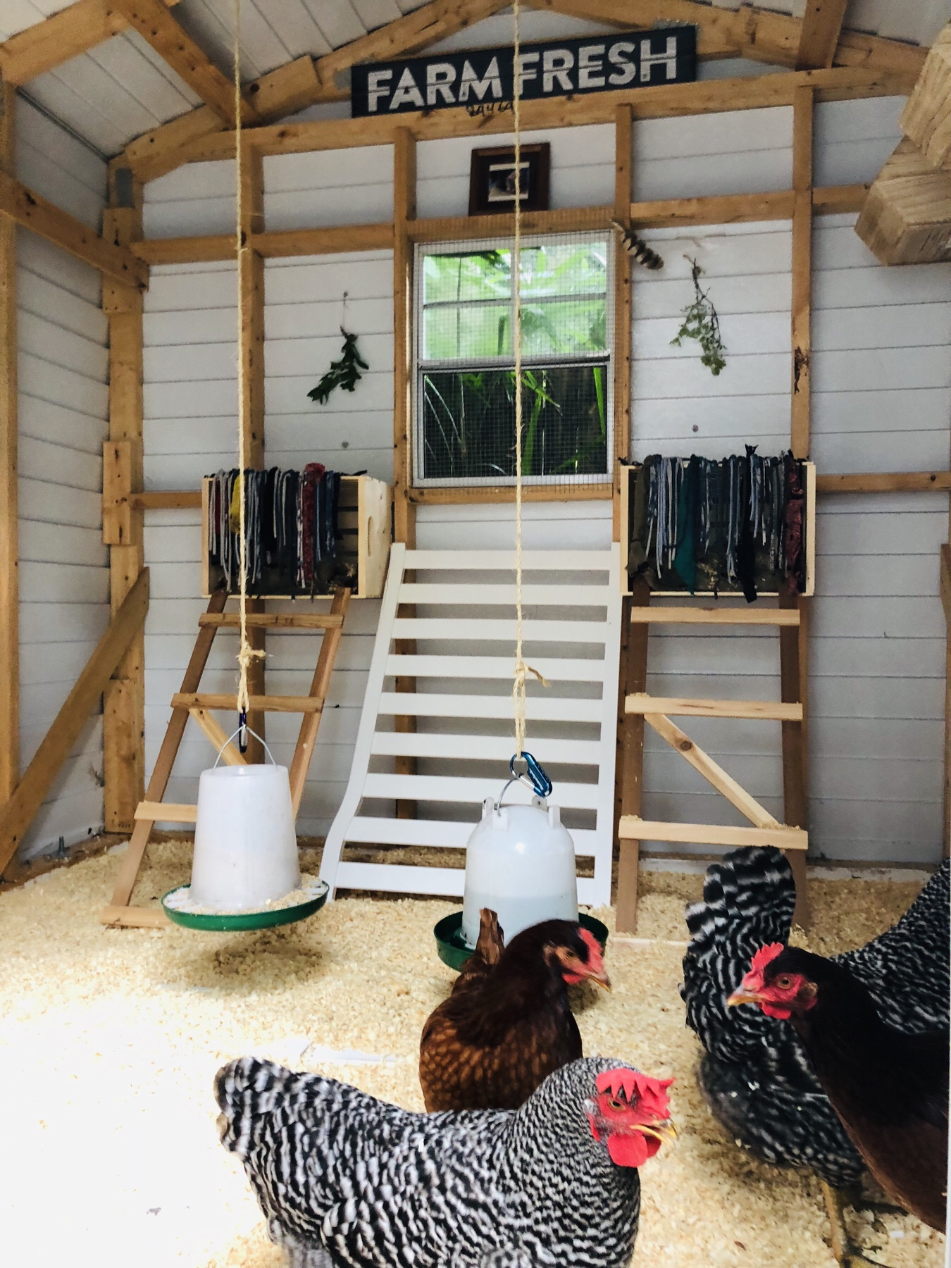 DIY: From Old Shed to Chicken Coop