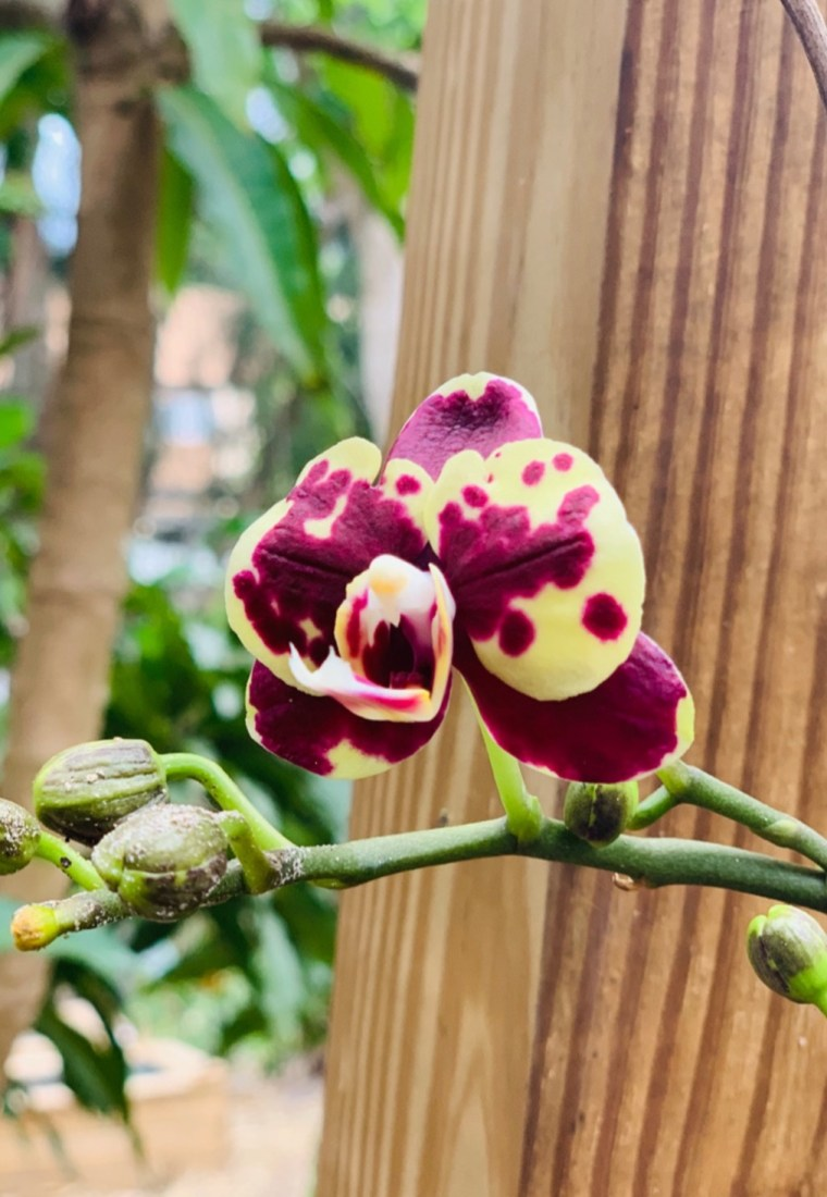 How To Successfully Grow Orchids By Forgetting About Them