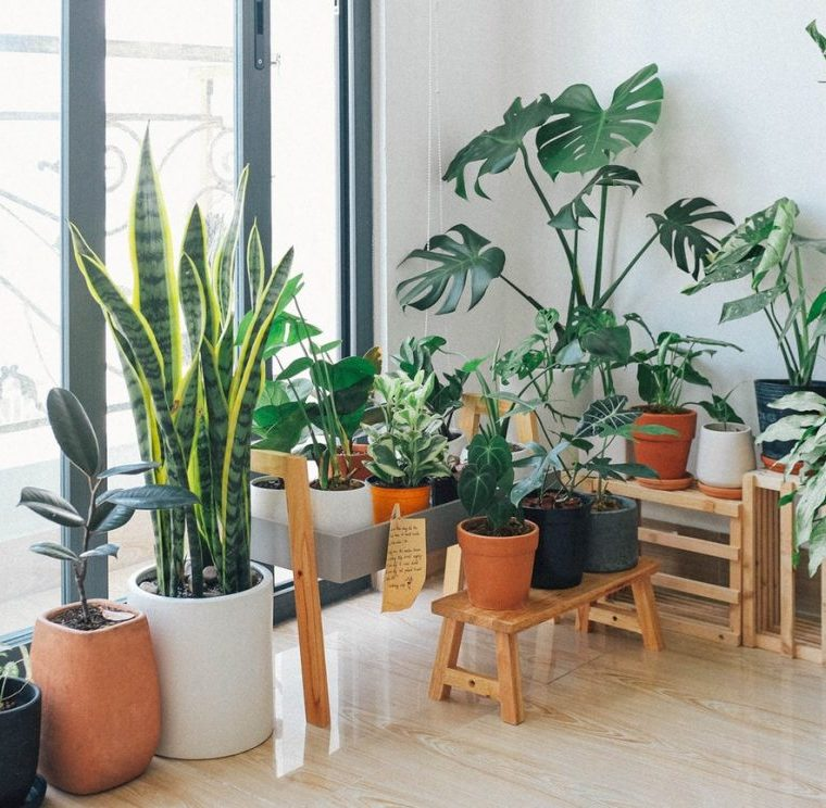 5 Beautiful Ways to Add More Plants to Your Home