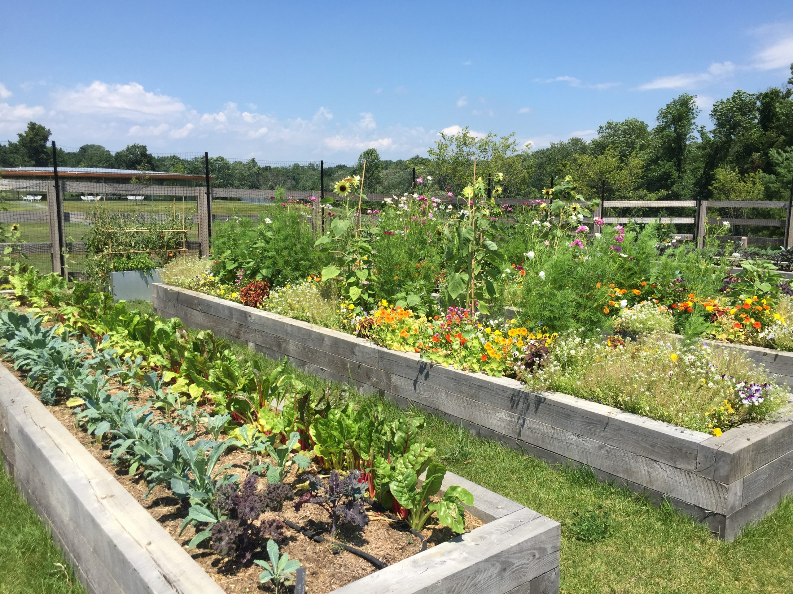 Ways to Learn about Gardening in Local Community