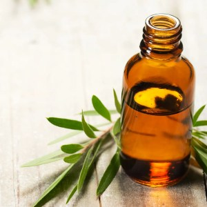 A small brown bottle with essential oil and a green Melaleuca branch
