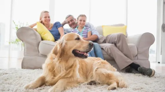 Family and their dog gathering in living room
