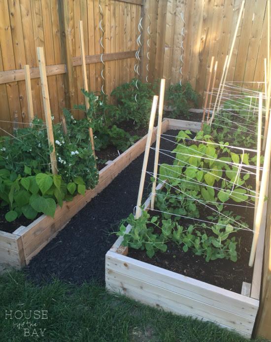 Veggie Garden Backyard Oasis