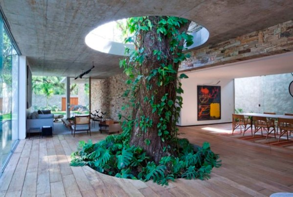 house built around tree