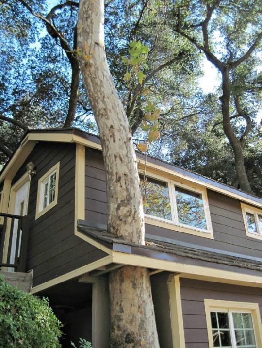 house built around tree