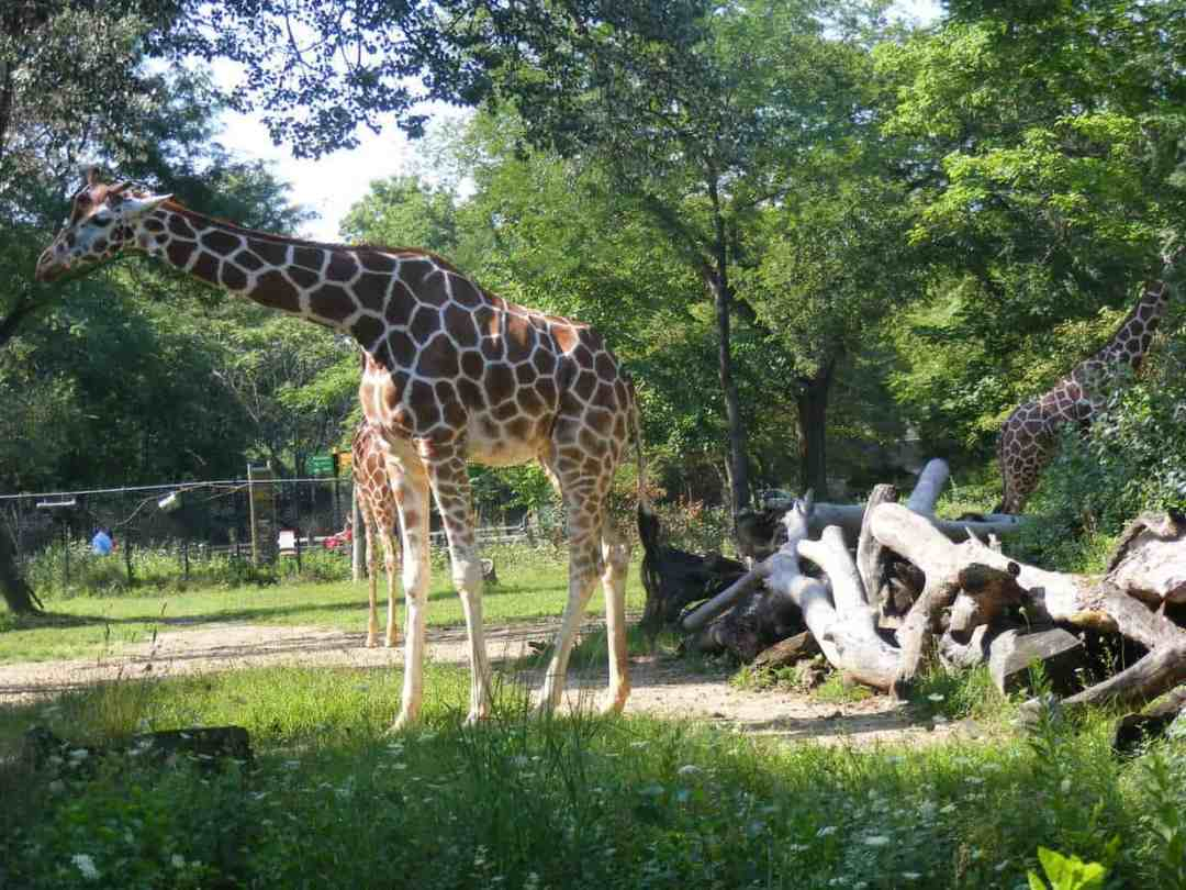 Brookfield Zoo