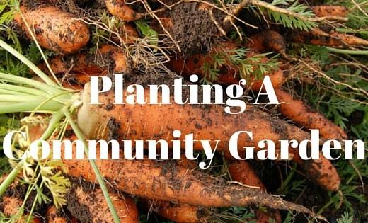 Starting a Community Garden