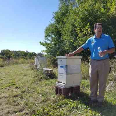 Feed a Bee, Save the Food at Cantigny Golf Course