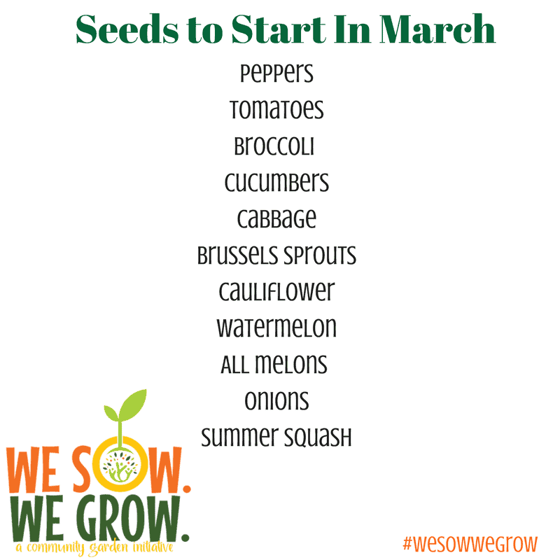 Seeds to Start In March