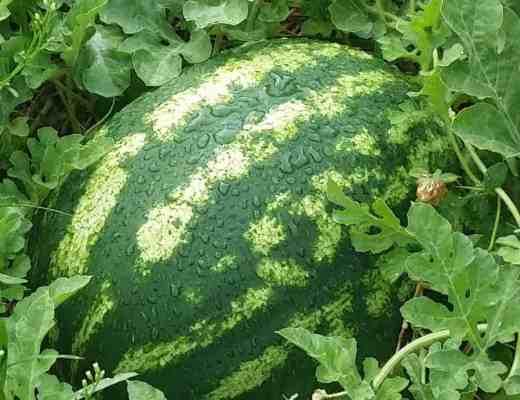 We Sow, We Grow Community Garden Initiative