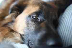Milos Kitchen Home-Style-Dog Treats