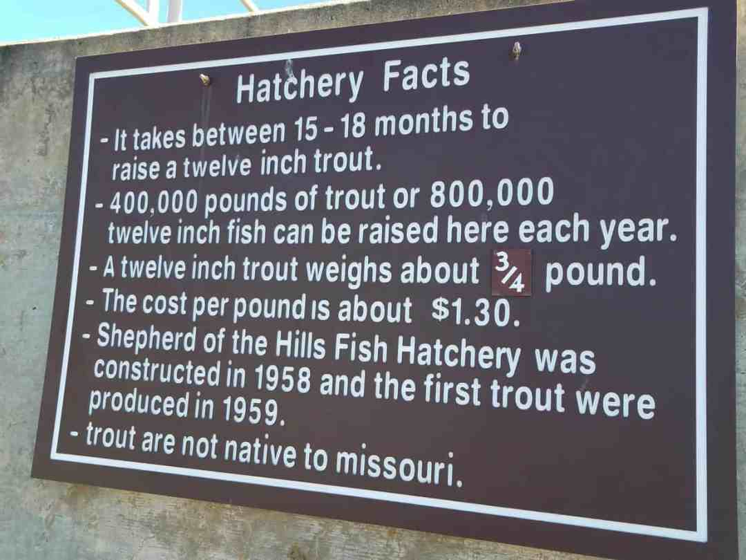 Shepherd of the Hills Fish Hatchery - Free Family fun in Branson, Missouri Here you can feed raised trout, and learn about birds and animals in Missouri