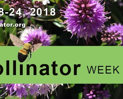 It's National Pollinator Week – Do You Support YOUR Pollinators?
