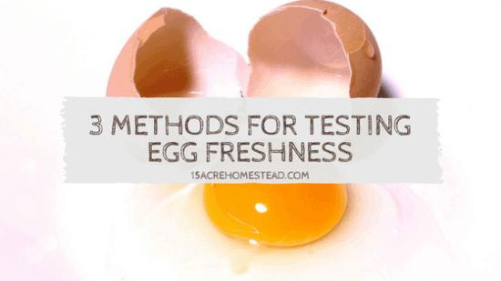 Homestead Blog Hop Feature - 3-Methods-for-Testing-Egg-Freshness