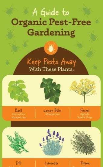 Homestead Blog Hop Feature - Organic Pesticide