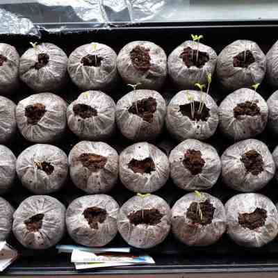 How To Start Seeds – 5 Steps to Successful Germination of Vegetable Seeds