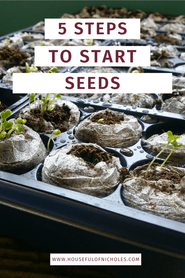 5 Steps to Start Seeds