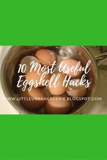 Homestead Blog Hop - 10 Most Useful Eggshell Hacks