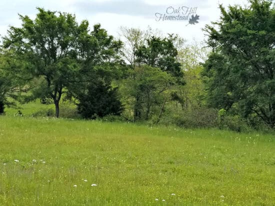 Homestead Blog Hop Feature- How to Find Homestead Land