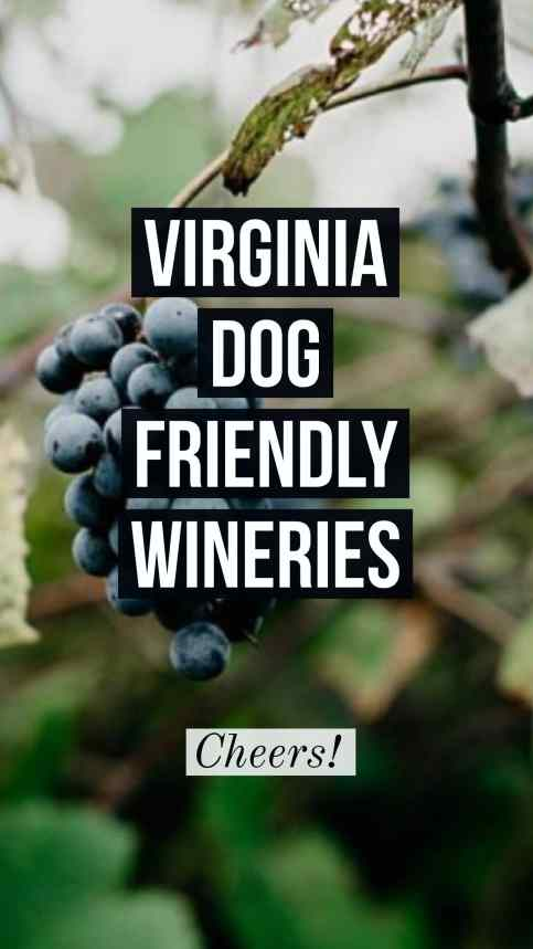 dog friendly wineries in Virginia