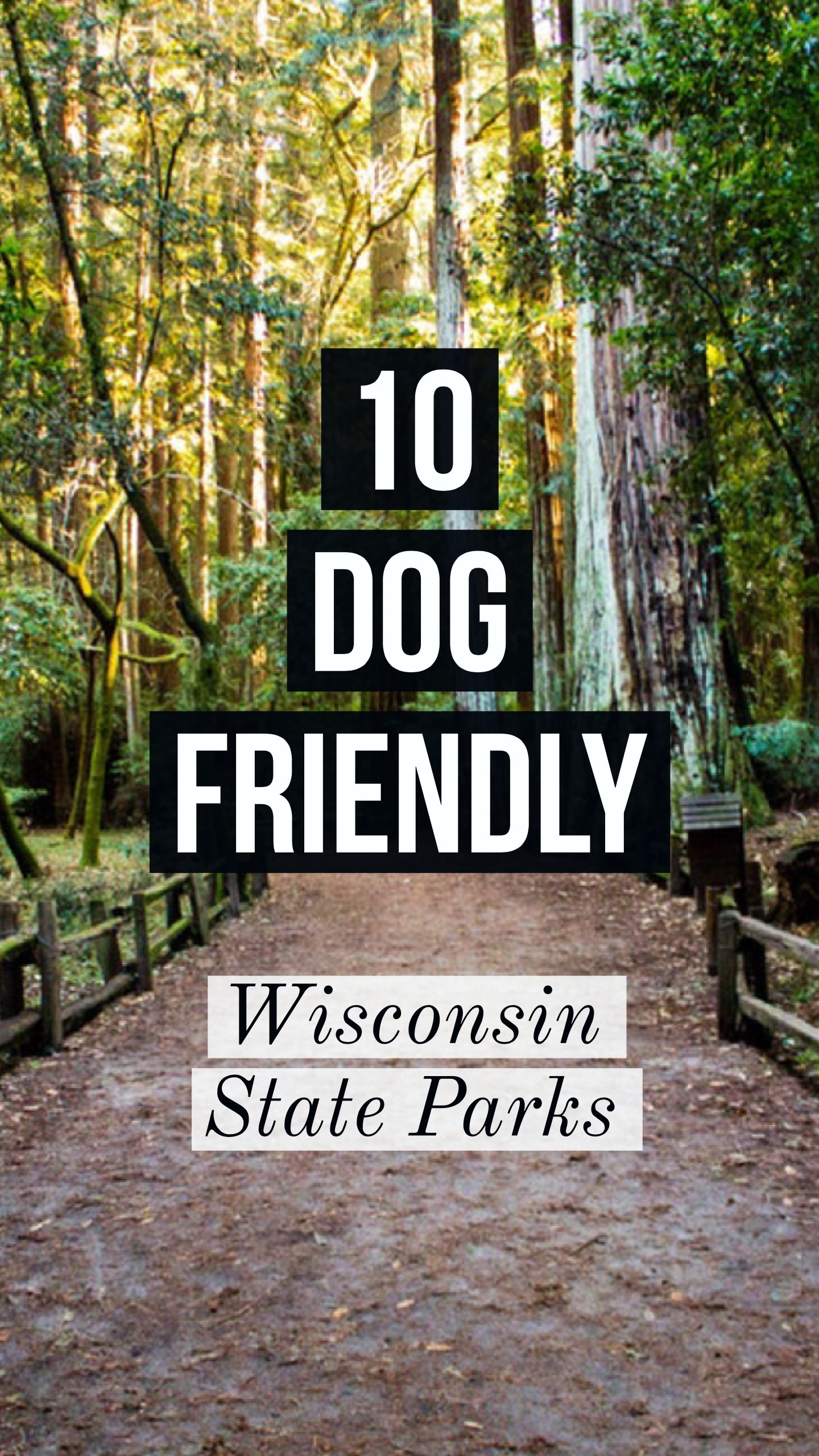 10 dog friendly Wisconsin state parks