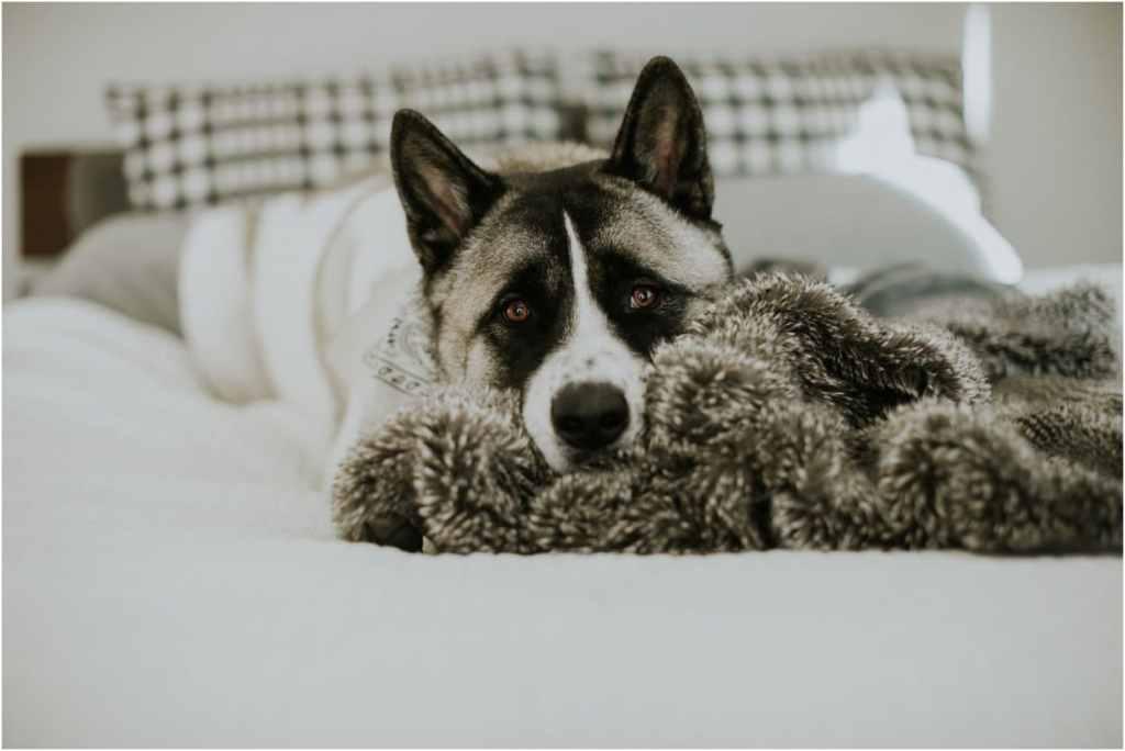 Restoration Hardware Faux Fur Blanket